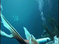รักนี้หัวใจมีครีบ_เบื้องหลังใต้น้ำ.mp4