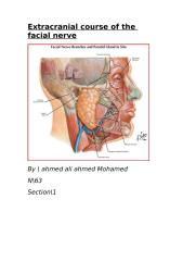 anatomy word.doc