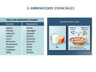 Metabolismo de Aminoácidos 2.pdf